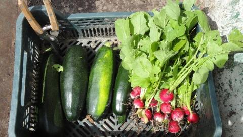 Les légumes arrivent !