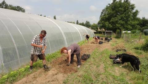 Récolte de pommes de terre ce WE